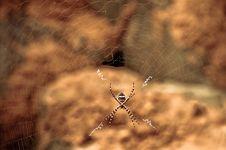 Free Web Crawler Stock Images - 14595594