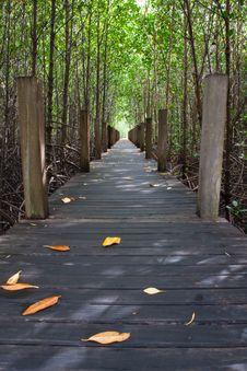 Wood Bridge In Mangrove National Park Stock Photo