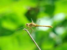 Free Dragon-fly Stock Photo - 14597610