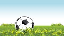 Free Soccer Ball In The Grass Stock Images - 14597684