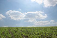 Free Wondeful Green Field Royalty Free Stock Images - 14597839