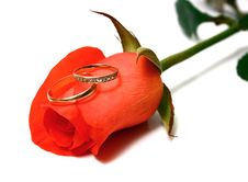 Free Rose And Wedding Rings Royalty Free Stock Photography - 14597917
