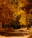 Free Aspen Grove 3 Stock Images - 1467154