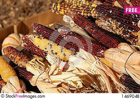 Free Holiday Corn Crop Royalty Free Stock Photos - 1469048