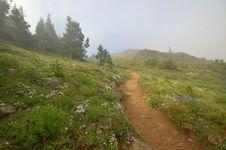 Free Mountain Meadow Royalty Free Stock Photo - 1460005
