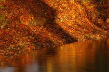 Free Autumn Stock Photography - 1460382