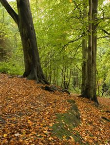Woodland In Fall Royalty Free Stock Photography
