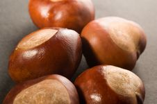 Free Conkers Stock Image - 1460591
