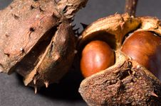 Free Conkers Royalty Free Stock Image - 1460616