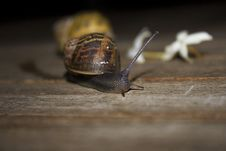 Free Snails Royalty Free Stock Photography - 1461367