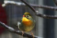 Free Green Bird Royalty Free Stock Photography - 1462237