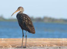 Free Bird Stock Image - 1464041