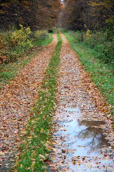 Free Autumn 1 Stock Image - 1464251