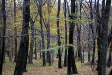 Free Autumn 4 Stock Images - 1464264