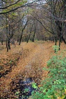 Free Autumn 5 Royalty Free Stock Photos - 1464268