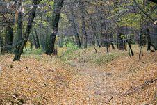 Free Autumn Forest Stock Photo - 1464290