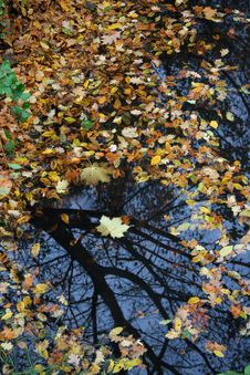 Autumn Puddle Stock Photos