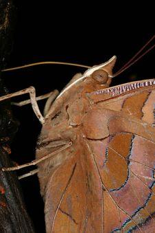 Free Butterfly Portrait Stock Image - 1464481