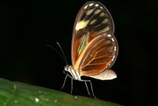 Free Tropical Butterfly 2 Royalty Free Stock Images - 1464499