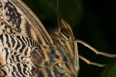 Free Tropical Butterfly S Portrait Stock Images - 1464534