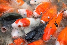 Free Fishes Stock Photography - 1466032