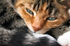 Free Sleepy Paws Stock Photos - 1466563
