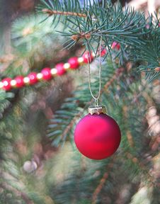 Free Red Christmas Ball On Evergreen Royalty Free Stock Image - 1466656