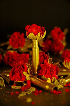 Free Rose With Bullet Casing Stock Images - 1467114