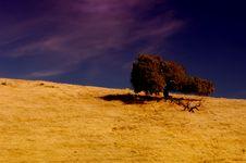Free Lone Tree Stock Photography - 1467172