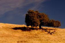 Free Lone Tree 2 Royalty Free Stock Photo - 1467195