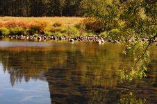 Free Merced River Stock Photo - 1467310