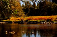 Free Merced River 2 Stock Photography - 1467322