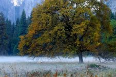 Free Yosemite Valley 2 Stock Image - 1467651