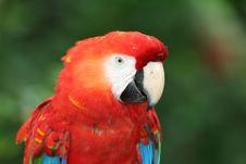 Free Macaw Royalty Free Stock Photo - 1467885