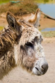 Free Donkey Headshot Stock Photo - 1468710