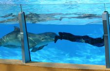 Free Dolphins Pushing Diver Stock Image - 1468741