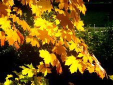Free Autumn Leaves Stock Photo - 1469530
