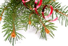 Free Isolated Pine Branch Stock Photo - 1469580