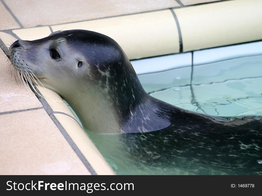 Bathtub Seal - Free Stock Images & Photos - 1469778 ...