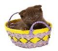 Free Brown Kitten In Yellow Basket. Royalty Free Stock Photos - 14608038