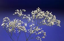 Free Beautiful Decorative Branch With White Flowers Stock Photography - 14600632
