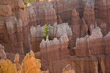 Free Bryce Canyon Hoodoos In The First Rays Of Sun Royalty Free Stock Photography - 14600697