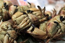Free Crab For Sale At Market Stock Photography - 14601892