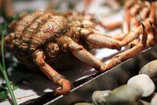Free Crab On Counter Stock Photos - 14601893