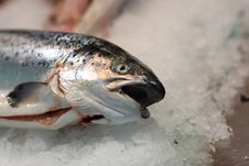 Fish For Sale At Market Royalty Free Stock Photography