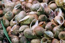 Free Snails Stock Photography - 14601962