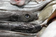 The Fish At Market Stock Photography
