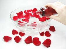 Free Hand In Plate With Rose Petals Royalty Free Stock Photo - 14602135