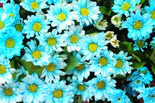 Free Flower Royalty Free Stock Photography - 14602297