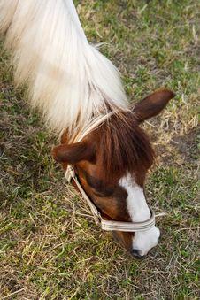 Free Horse Grazing Royalty Free Stock Photos - 14602778